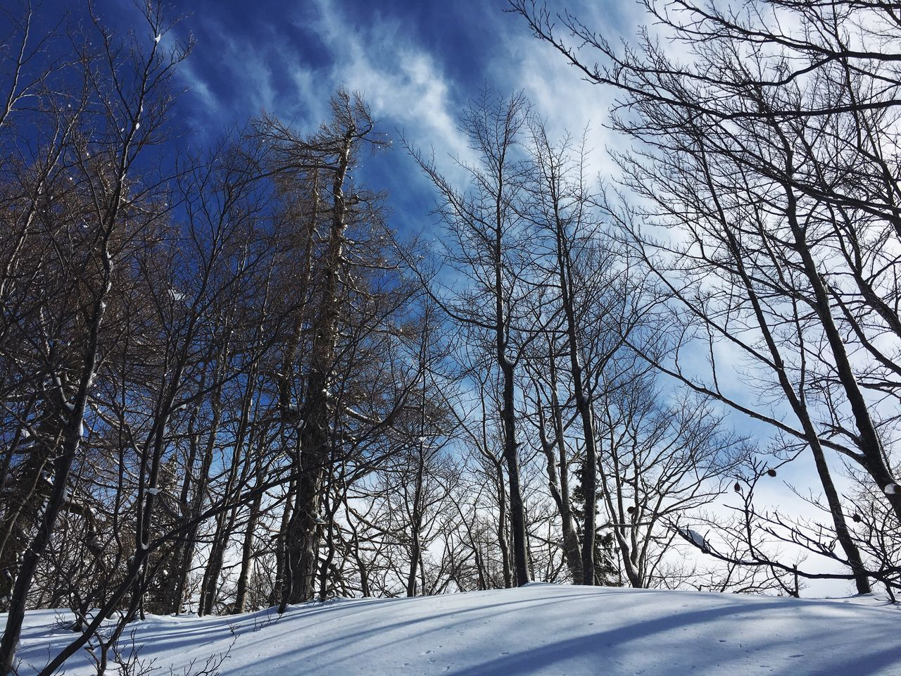 Snow country. Snow Cold Temperature Winter Bare Tree Sky Tree Nature Weather Low Angle View No People Outdoors Beauty In Nature Scenics Cloud - Sky Day Tranquility
