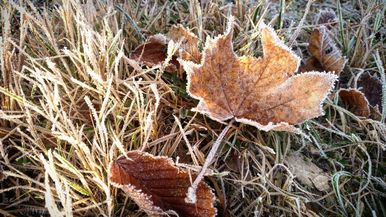 Frosty morning Nature Outdoors Field Close-up Leaf No People Day Beauty In Nature Fragility Wintertime Frozen Frosty Mornings Morning Light Beauty In Nature Taking Photos Tranquility Nature Beautiful Frosty Nature Frost Winter Leaves_collection Leaves On The Ground Leaves