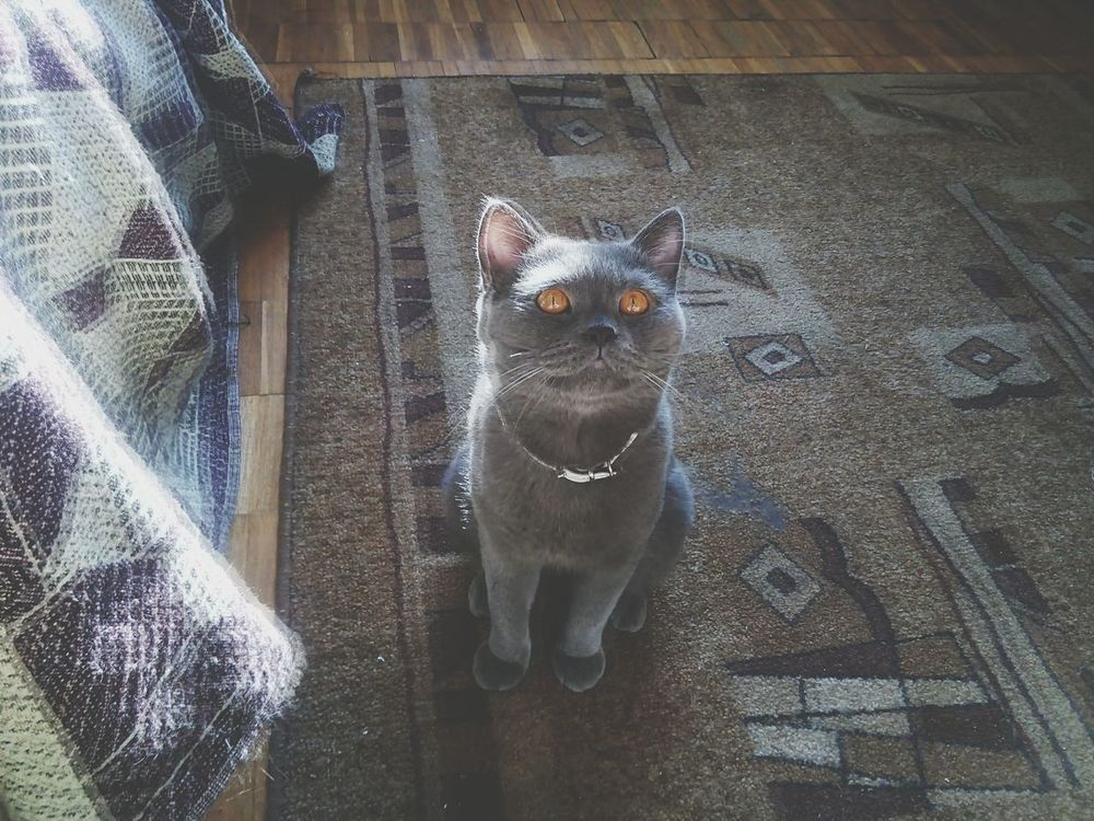 Nature On Your Doorstep Cats Of EyeEm Tommi