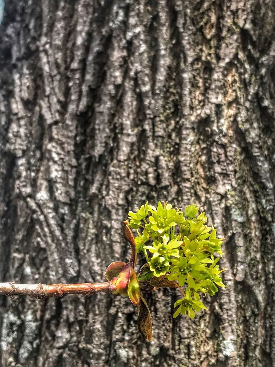 Springtime Tree Trunk Tree Budding Budding Tree Spring Animal Wildlife No People Close-up Nature Focus On Foreground Day Outdoors Textured  Growth Beauty In Nature
