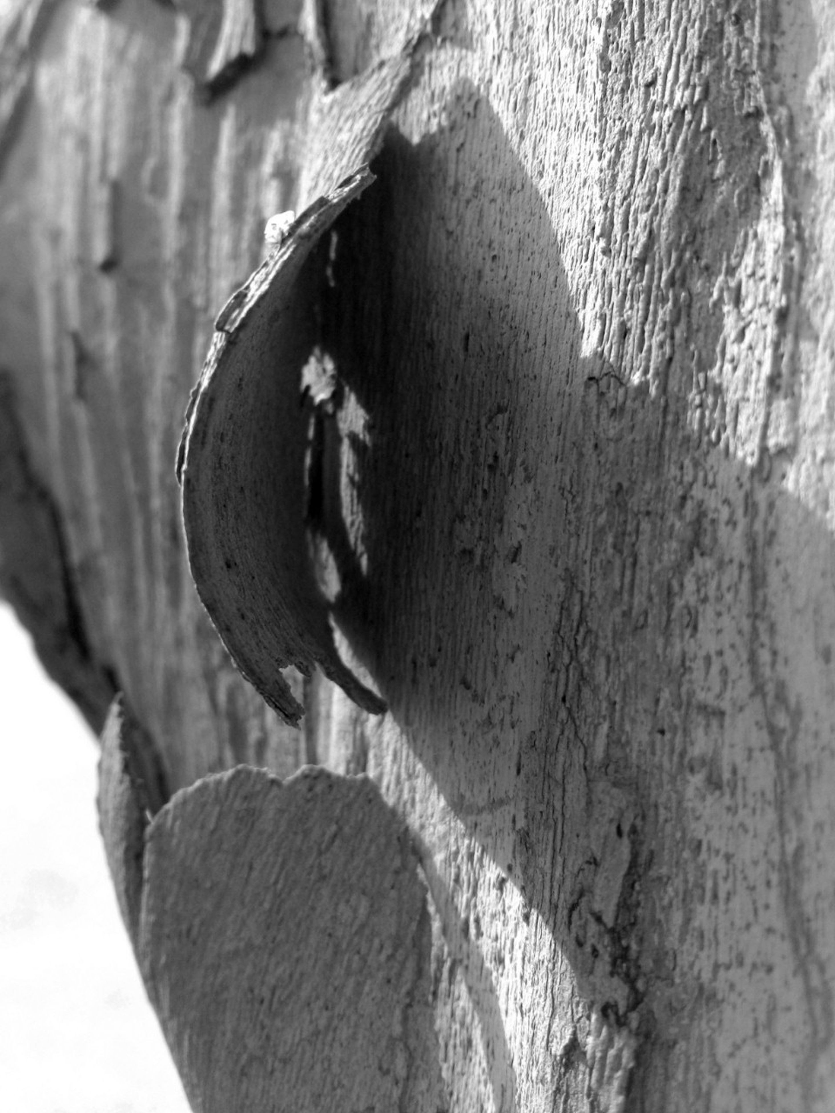 close-up, focus on foreground, outdoors, day, wall - building feature, selective focus, sunlight, textured, part of, nature, cropped, old, built structure, wood - material, plant, weathered, shadow, wall