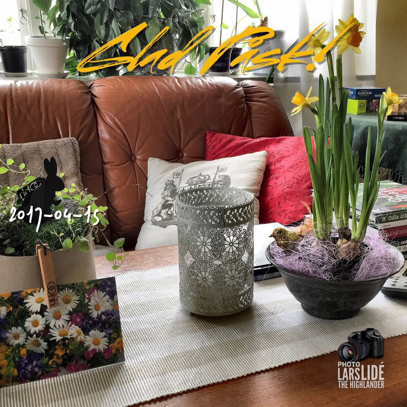 Flower Indoors  Living Room Home Showcase Interior No People Potted Plant Home Interior Day Happy Easter!