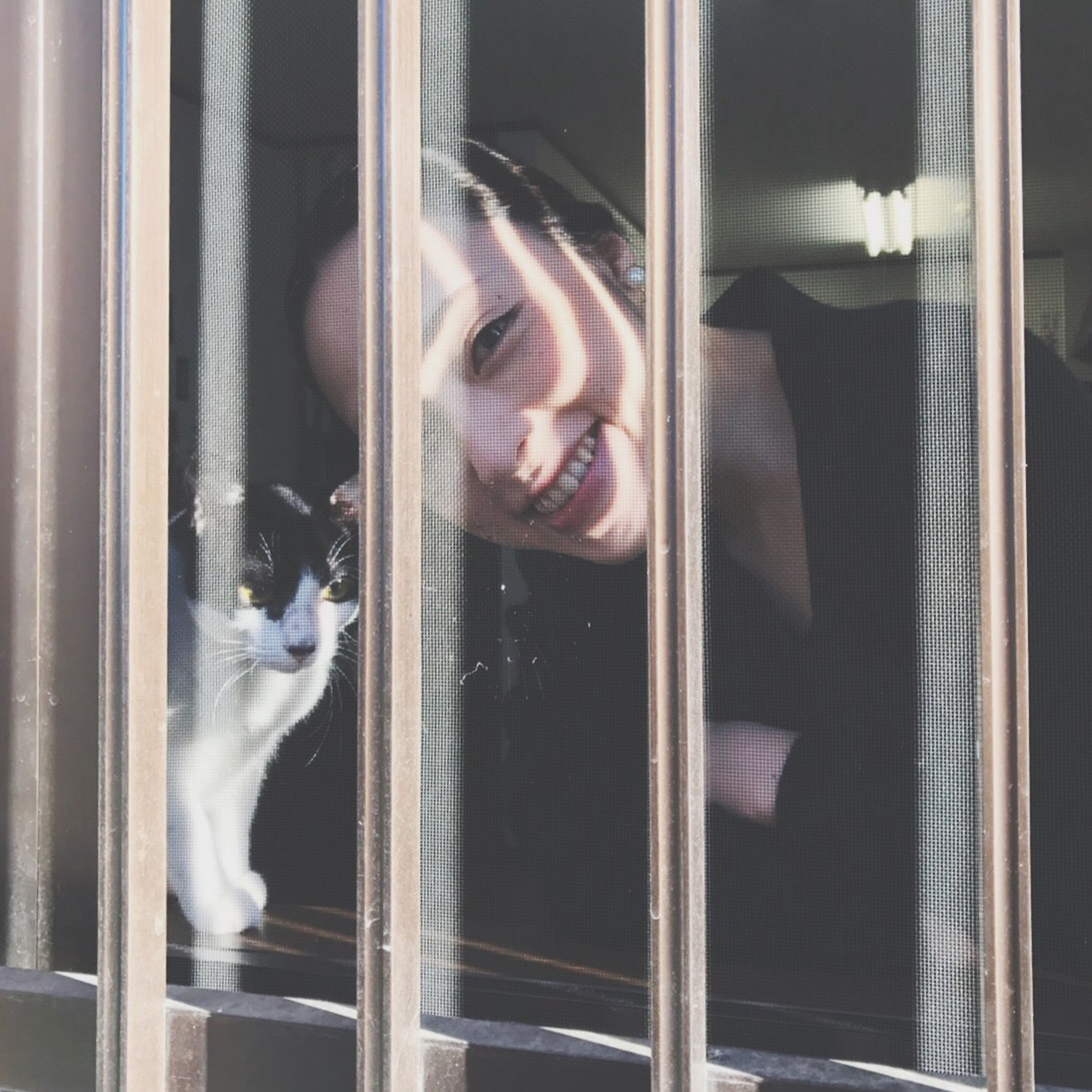 window, pets, domestic cat, real people, transparent, domestic animals, looking through window, one person, looking at camera, cat, indoors, animal themes, curtain, mammal, feline, watching, window sill, day, close-up, young adult, young women, human hand