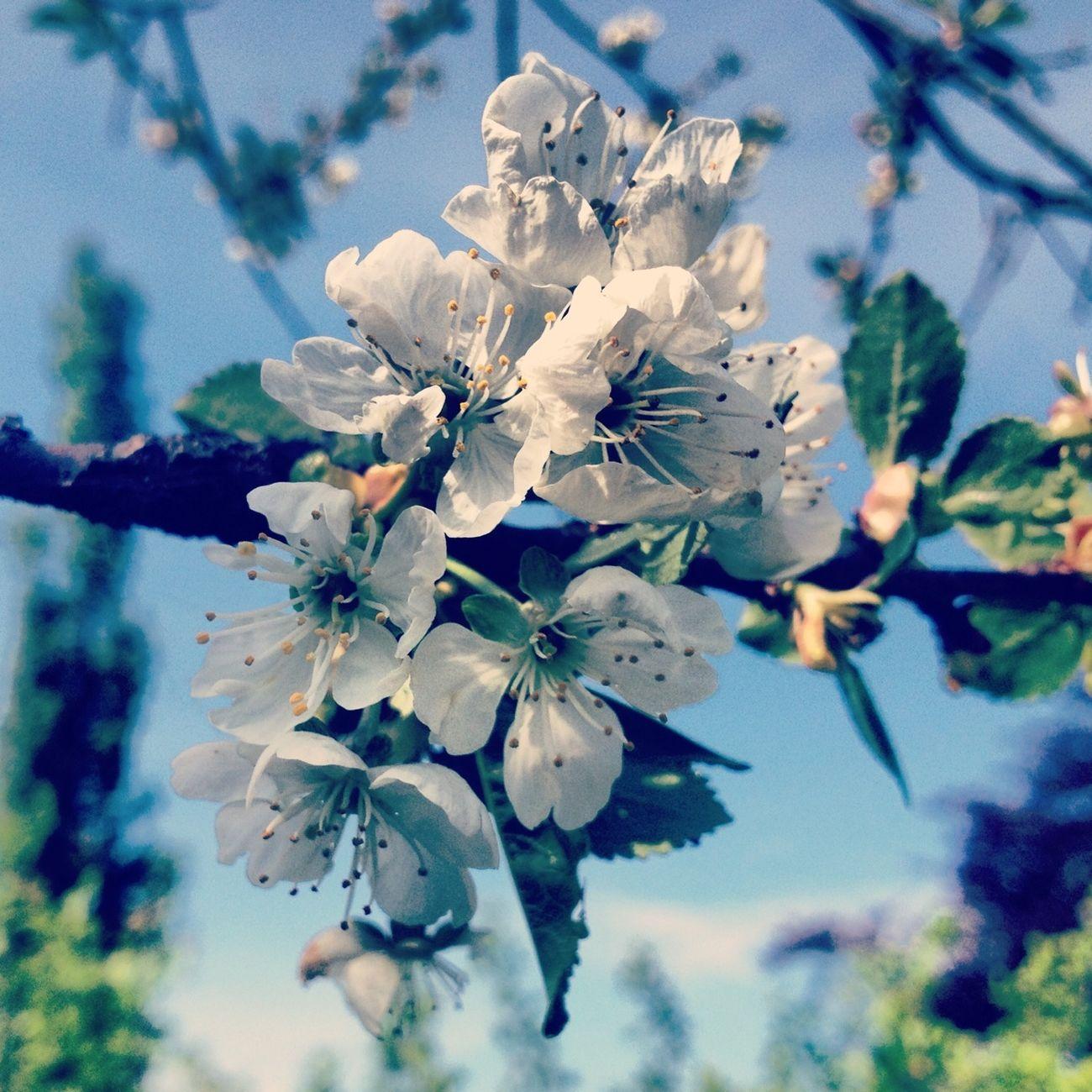 Flowers Nature EyeEm Nature Lover
