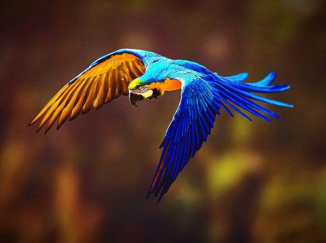 amazing and beautiful macaw bird! hope you like it! Nature Picoftheday Macaw Bird. Colors Wildlife Amazing_birds