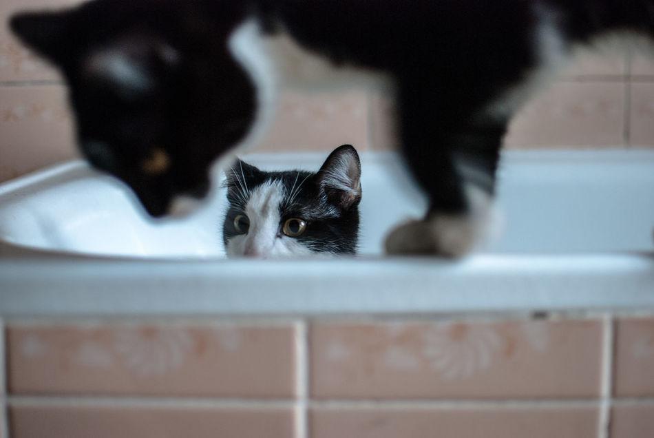 Beautiful stock photos of baby katzen,  Animal Themes,  Bathroom,  Bathrub,  Black Color