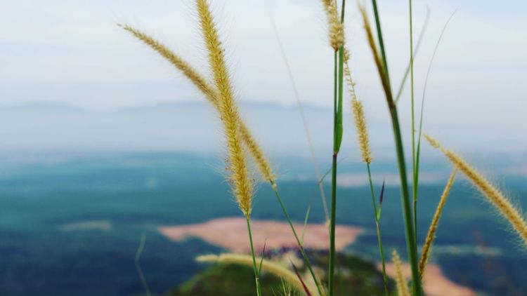 Nature Plant Tranquil Scene Scenics Outdoors Landscape Beauty In Nature Close-up Grass Naturephotography Canon EOS 70D Brogahill Hiking View Hikingadventures Hiking Broga Nature Lover Canon Mountain