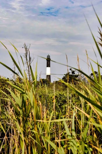 Lighthouse Guidance Outdoors Grass Sky Direction Day Growth No People A bit of nature to escape from the city 🌾🌺🌱🌳 ****************** July, 22th 2017 - Fire Island - NIKON D5500 - 44 mm - Time 1/250s - f/8.0 - iso 200 - filter: circular polarizer glass ************************* 🌲🌳🌴🌾🌸🌻🌼🌺🍄🍃 Nature Building Exterior Architecture Wind Turbine Wind Power Beauty In Nature Let's Go. Together. EyeEm Selects EyeEmNewHere