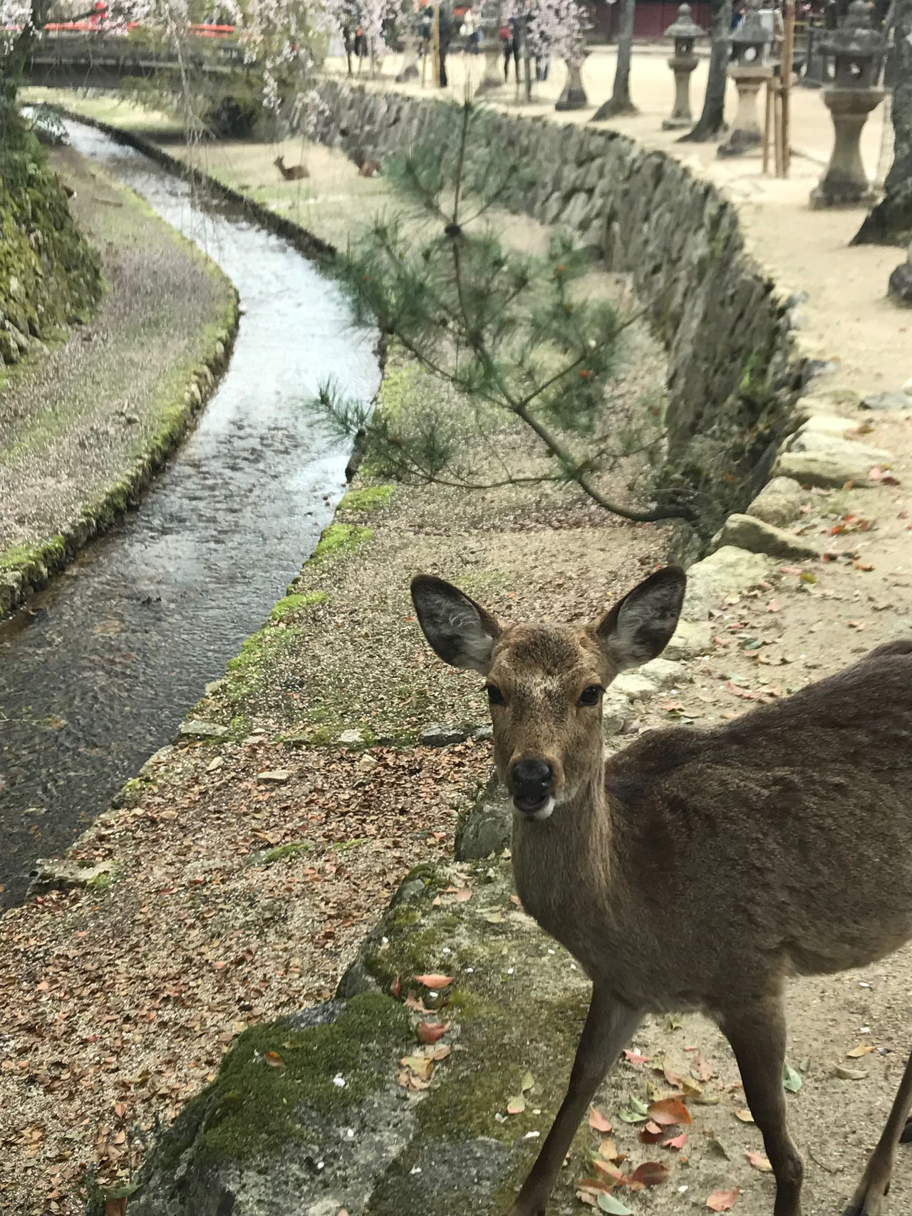 One Animal Animal Themes Day Animals In The Wild Animal Wildlife Outdoors Mammal Looking At Camera Portrait Nature Standing No People Water