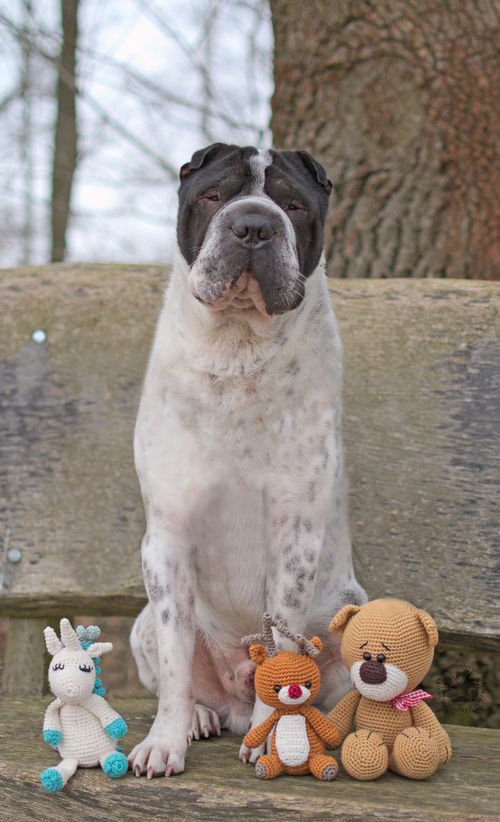 Kingston and his gang 😉 Pets Tree No People Animal Themes Day Nature Natur Hundefotografie Dog Dog Photography Hund Tree Outdoors Unicorn Einhorn Teddy Rudolf