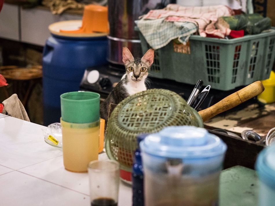 Nature's Diversities who's there? INDONESIA Urban Cat Animals