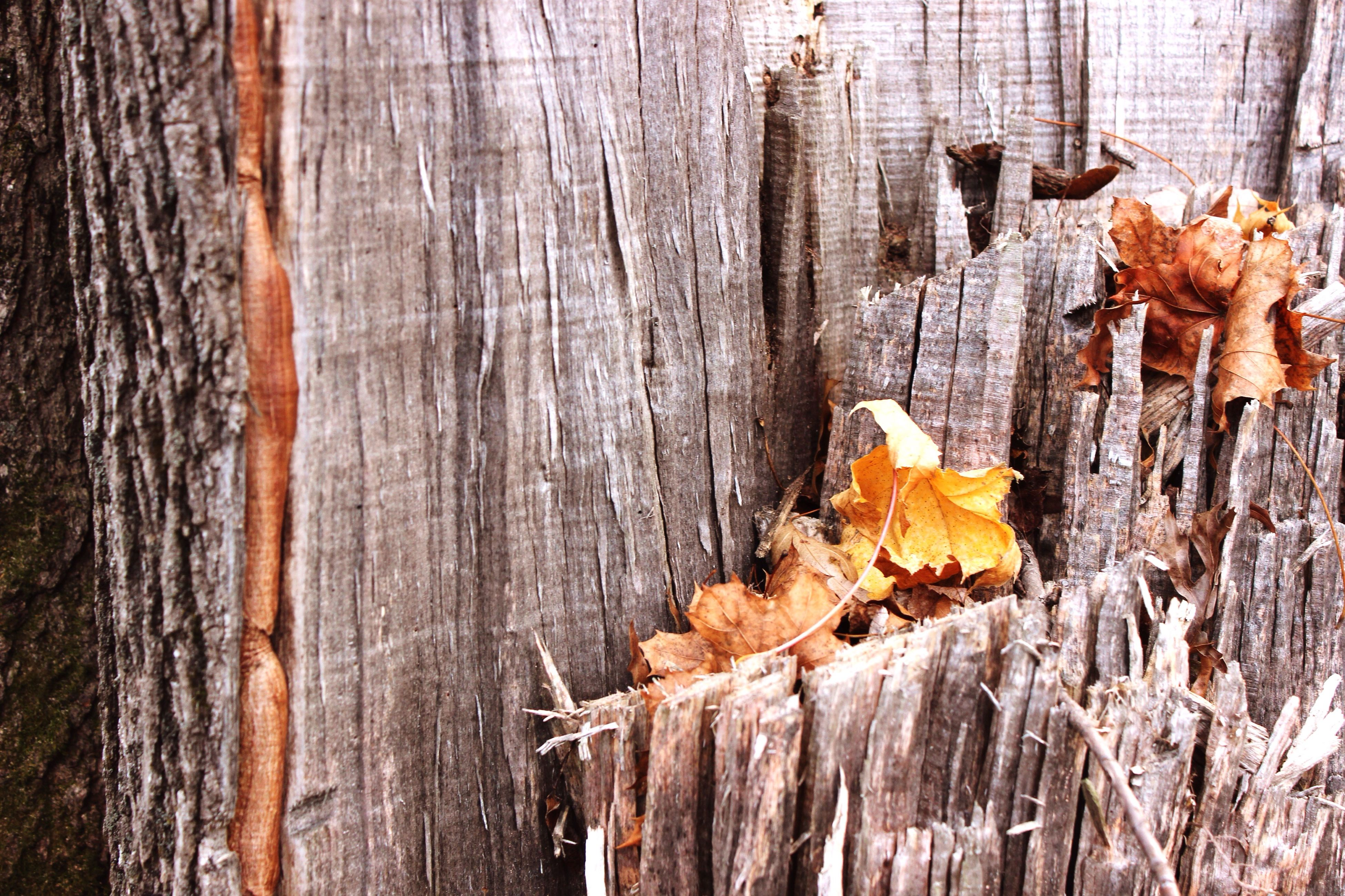 wood - material, close-up, textured, tree trunk, dry, wood, natural pattern, nature, brown, autumn, orange color, natural condition, wooden, bark, rough, no people, aging process, full frame, tree stump, weathered