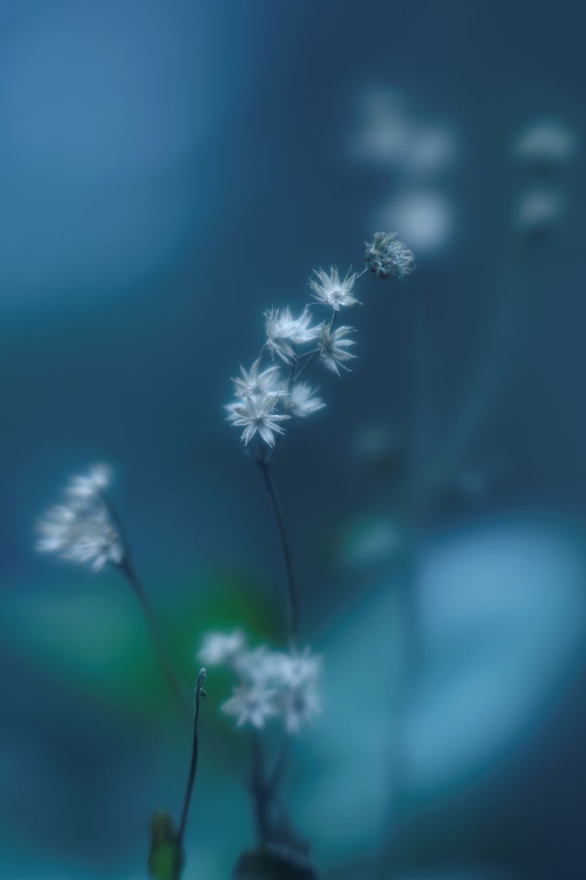 flower, nature, fragility, growth, plant, beauty in nature, softness, freshness, no people, outdoors, close-up, flower head, day