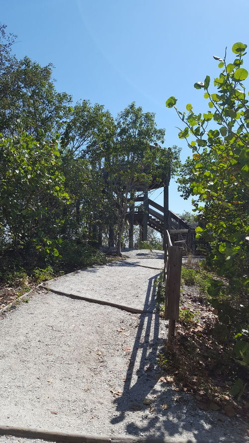 Up the path to the Observation tower Up The Path Observation Tower Emerson Point Florida Life Hiking Adventures Beautiful Nature Beach Day