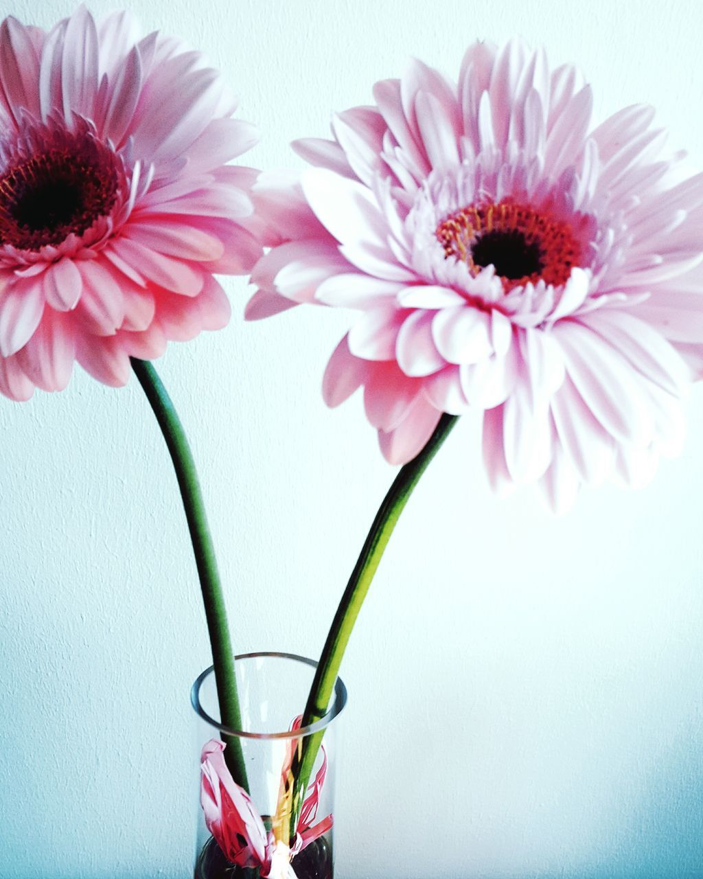 flower, vase, petal, freshness, flower head, beauty in nature, fragility, growth, plant, pink color, nature, no people, blooming, close-up, studio shot, indoors, bouquet, white background, day