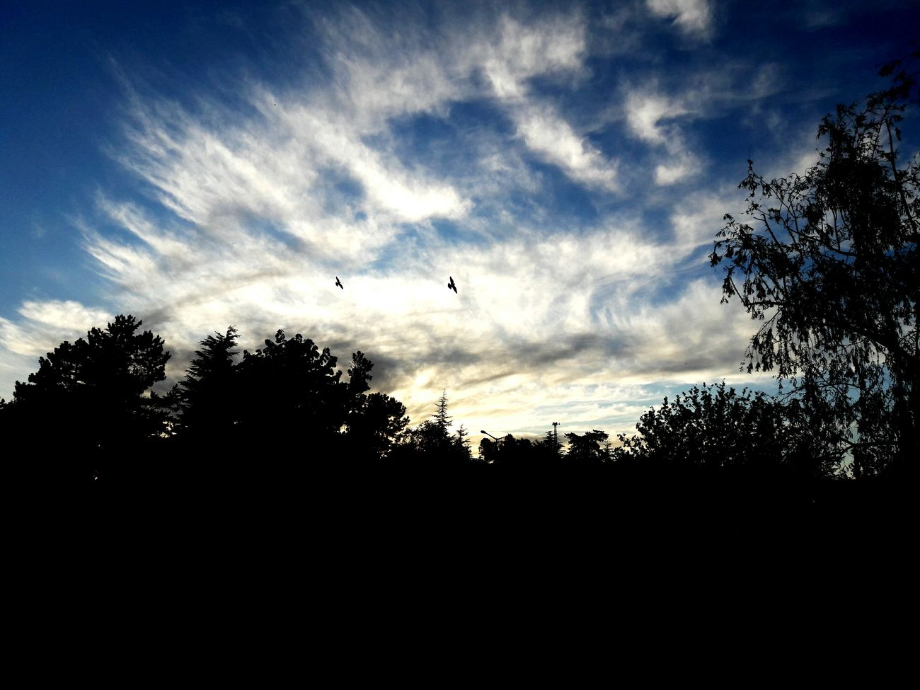 sky art! 💙 First Eyeem Photo Sky Trees Lovely
