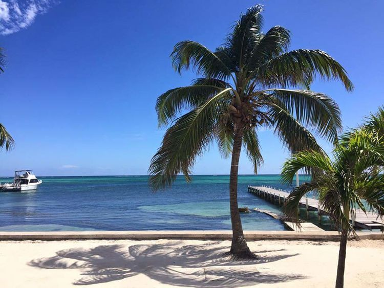 Beautiful palm tree and Caribbean ocean in Caye Caulker Belize. Excellent shadow too. San Pedro Belize  San Pedro Ambergris Caye Central America Palm Tree Ocean Ocean View Caribbean Sea Caribbean Island Island White Sand Teal Blue Water Shadow Sailboat Caye Caulker