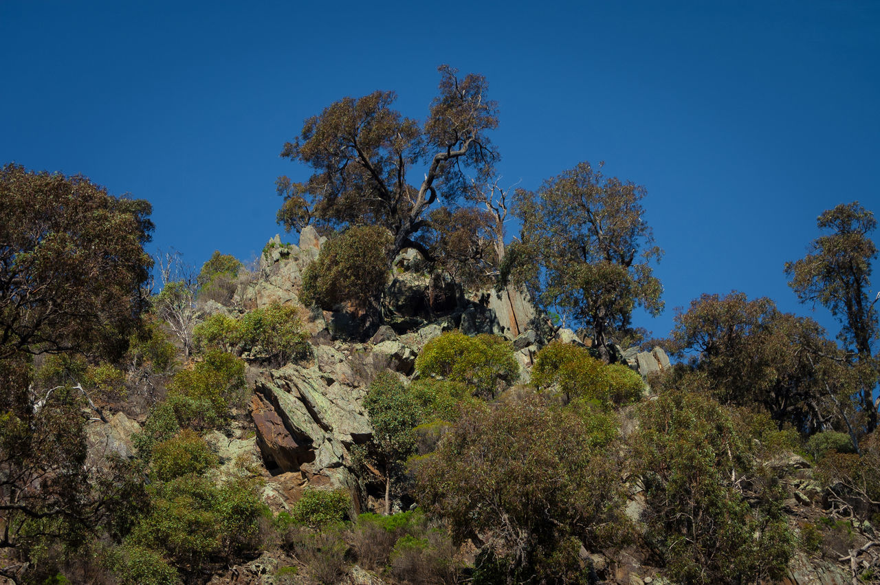 top of the ridge Australian Bush Beauty In Nature Blue Clear Sky Day Ecosystem  Forest Growth Nature No People Outdoors Plant Ridge Scenics Sky Tranquility Tree