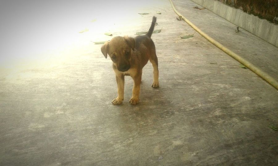 Little life we should respect and give shelter to them and I just love these cute animals and love to click their pics What I Value EyeEm Best Shots RePicture Learning OpenEdit Summer Dogs Human Vs Nature Beautiful Creatures Beautiful Creature Stray Dogs .
