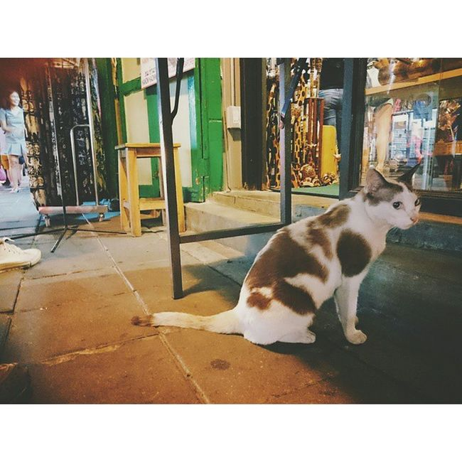 🐱 ⚫ แ ม ว . . . . Traval Traveling Travaler Journey Journal Thailand ThanonKhaoSan Khaosanroad KhaoSan Cat Cataholic Catlover Animal Animalover Night VSCO Vscocam