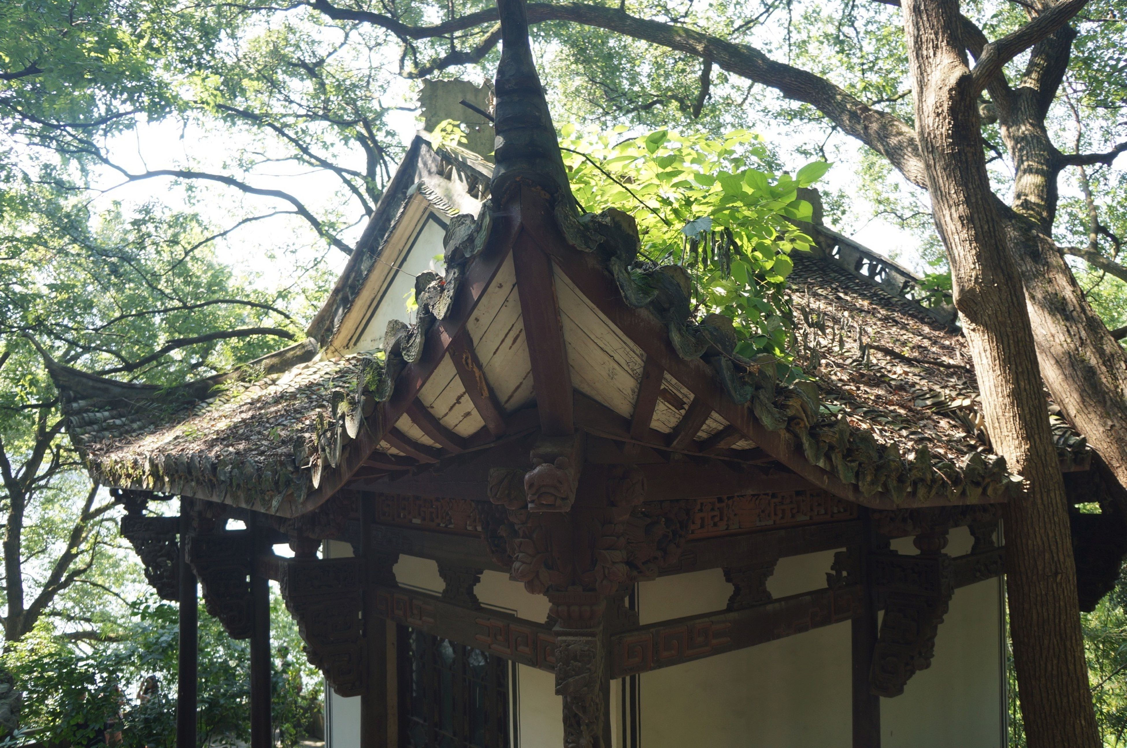 tree, low angle view, built structure, architecture, building exterior, branch, sky, place of worship, day, history, religion, outdoors, growth, no people, roof, tree trunk, spirituality, travel destinations, old, architectural feature