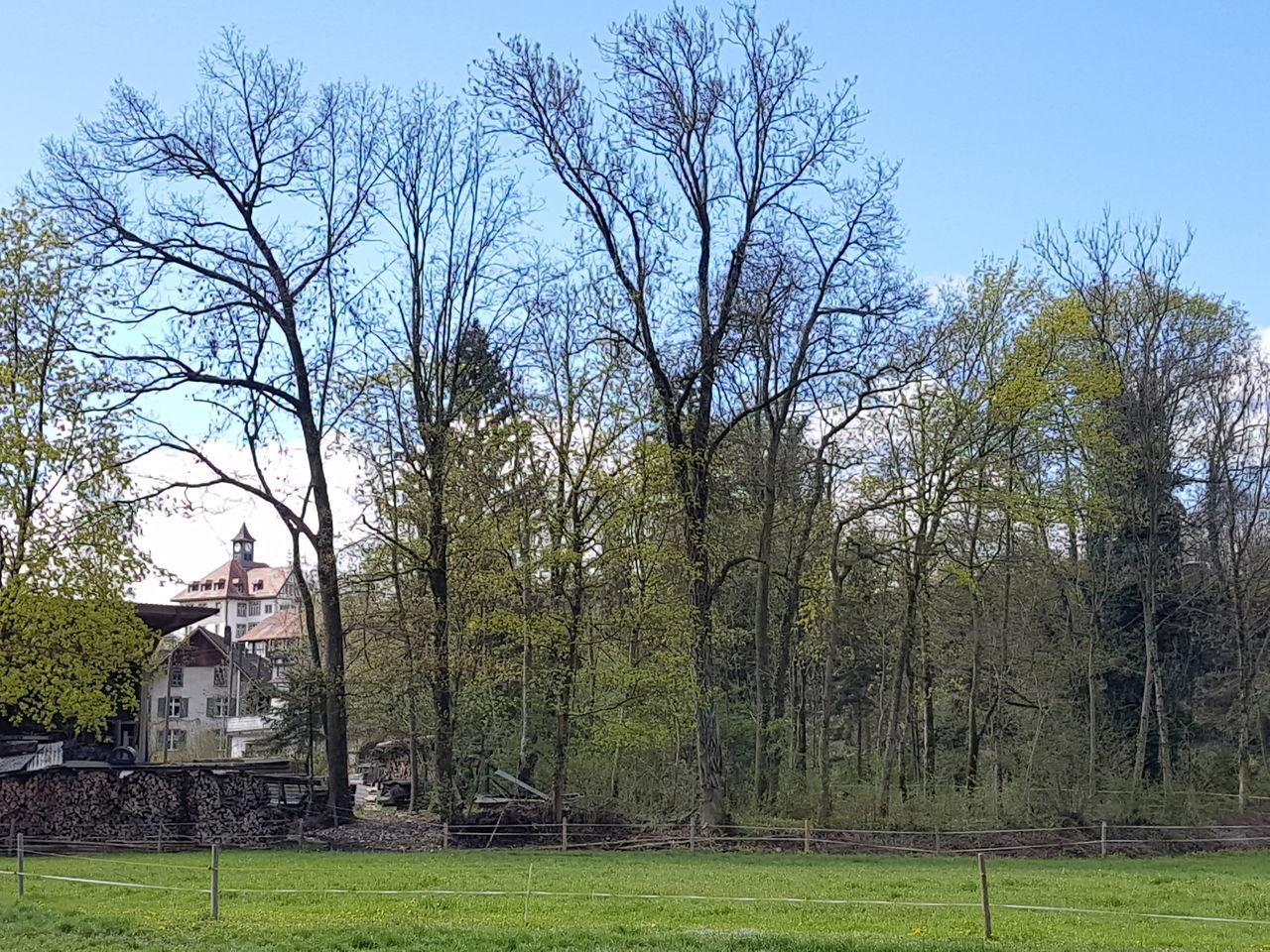 Altes Schulhaus von Uttigen Spring Frühling Scool Schulhaus Meadow Weide