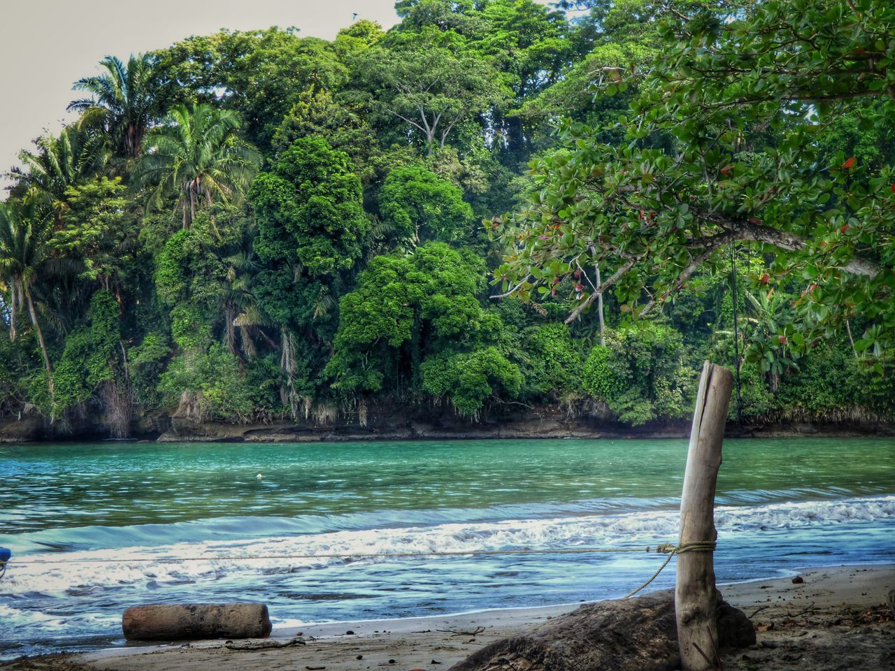 tree, nature, water, beauty in nature, outdoors, scenics, sea, forest, no people, tranquility, growth, beach, day, tree trunk, branch