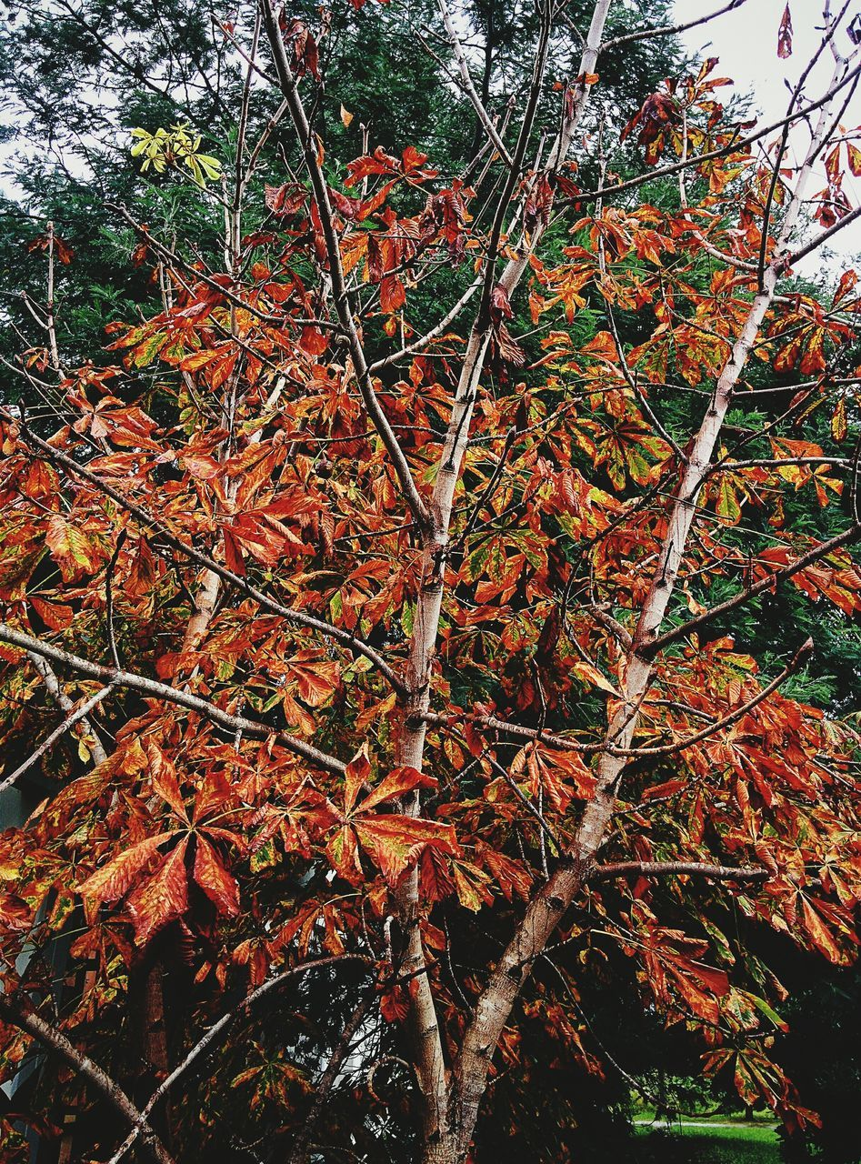 nature, leaf, autumn, growth, tree, beauty in nature, outdoors, no people, day, tranquility, change, plant, branch, close-up