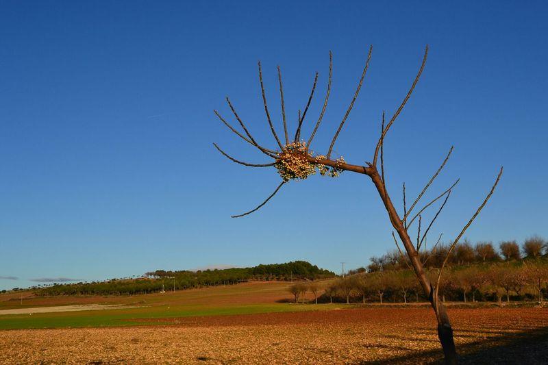 Nature Landscape Nofilter Tree