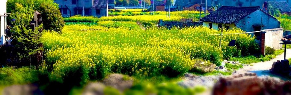 The Explorer - 2014 EyeEm Awards My Spare Time Beauty Of China Hometown Glory