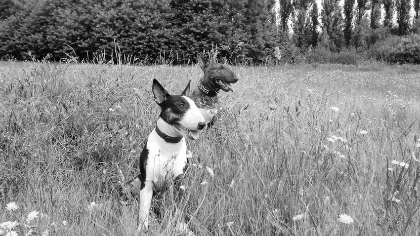 Out and about... Growth Dog Plant Pets Animal Themes Mammal No People Grass One Animal Purple NatureDogs Arts Culture And Entertainment Beautifully Organized Bullterrier Bull Terrier Dogs Of EyeEm Sitting Domestic Animals Tree Outdoors Day