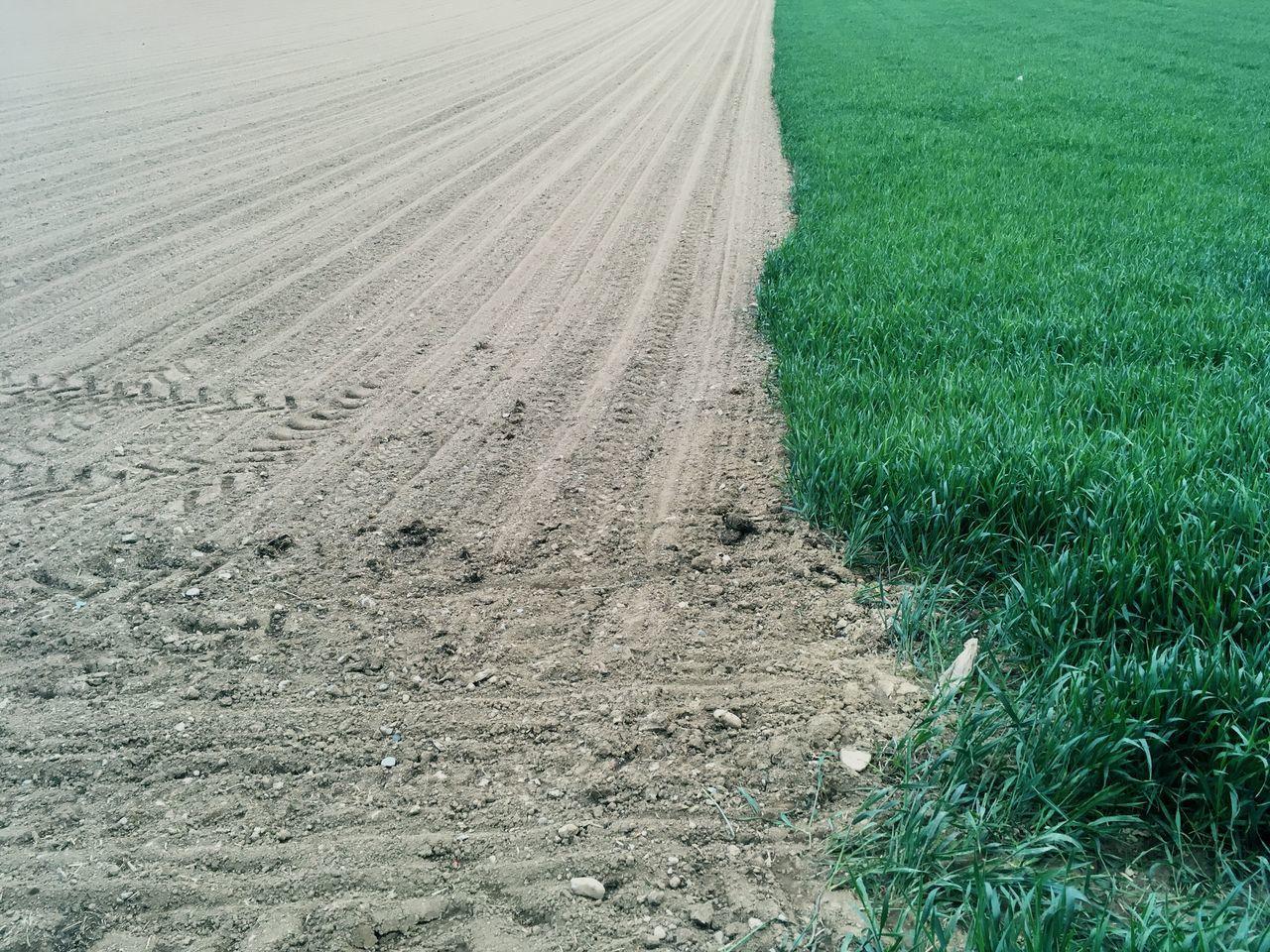 Landscape Agriculture Field Nature