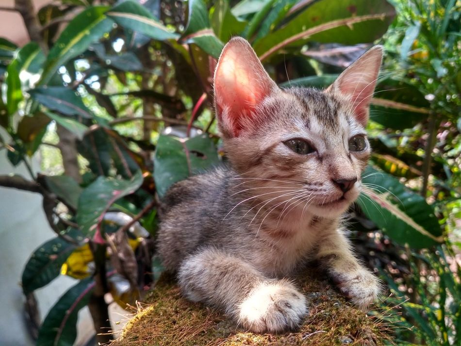Animal Mammal Nature Outdoors Close-up Feline Pets Domestic Animals Cute No People Sunlight