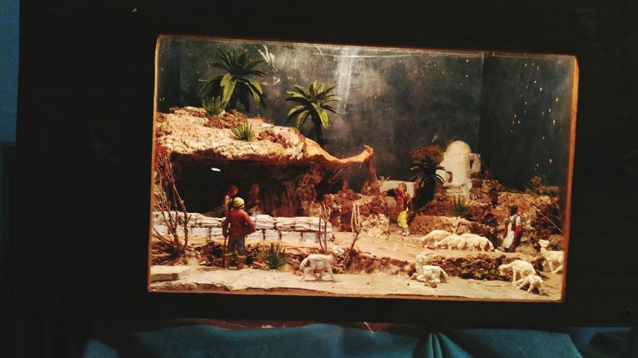 Diorama Presepe In Scatola EyeEm Selects No People Indoors  Animal Themes Day Close-up Freshness