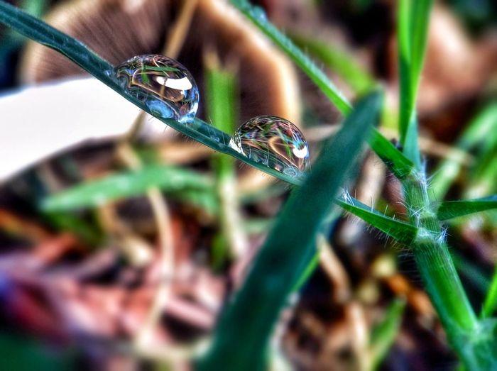 Dewdrops Shroomery Eye4reflections Eye4macro