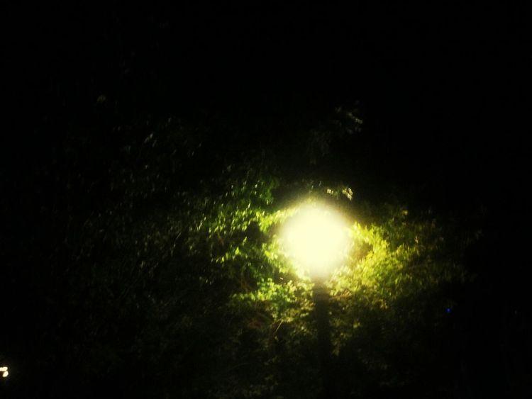 夜里掩映着昏黄路灯的树 Scenery Of The Town Scenery Greenery First Eyeem Photo