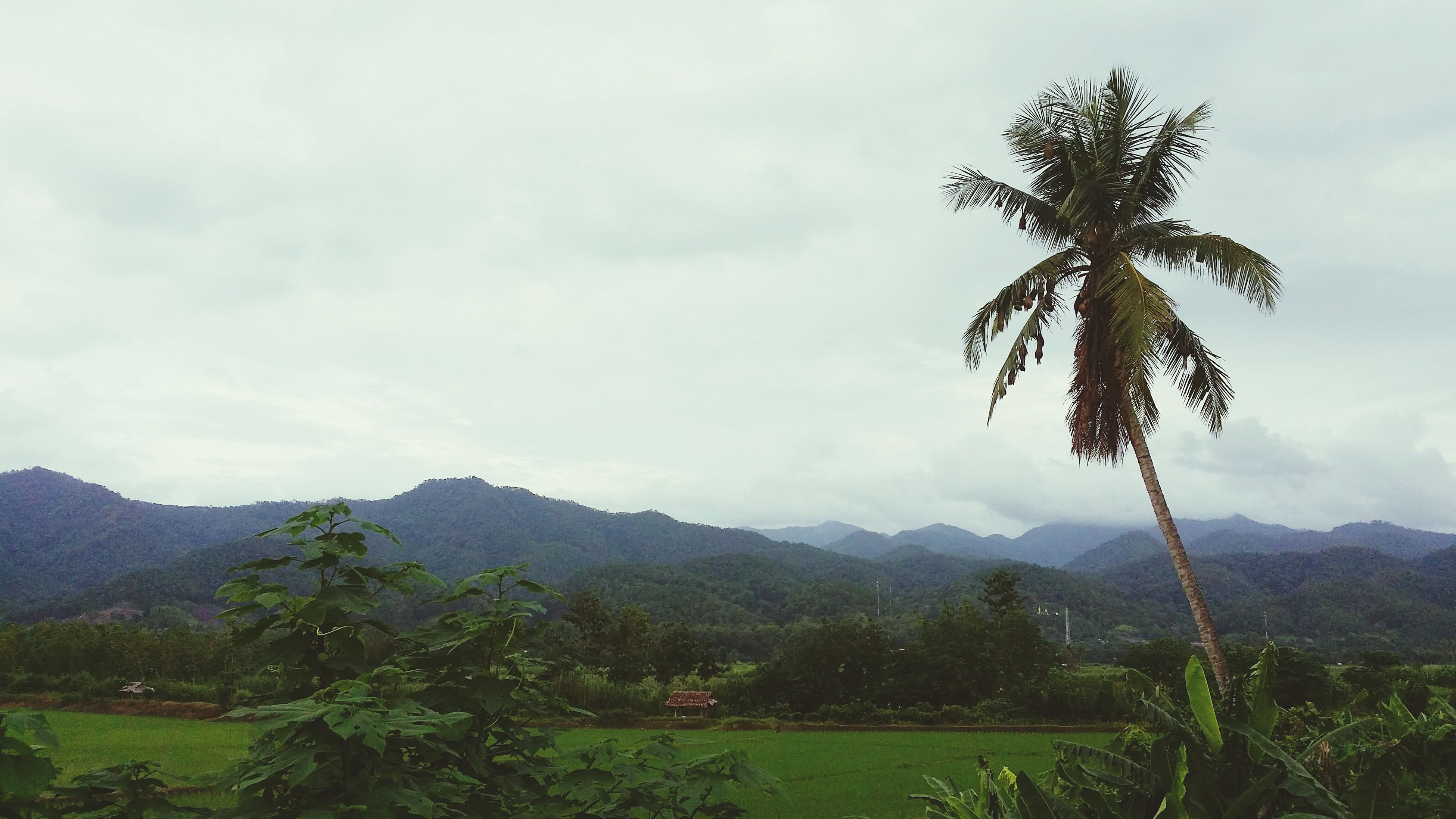 mountain, tree, sky, tranquility, mountain range, tranquil scene, landscape, beauty in nature, growth, scenics, nature, palm tree, cloud - sky, green color, cloud, cloudy, non-urban scene, field, plant, hill