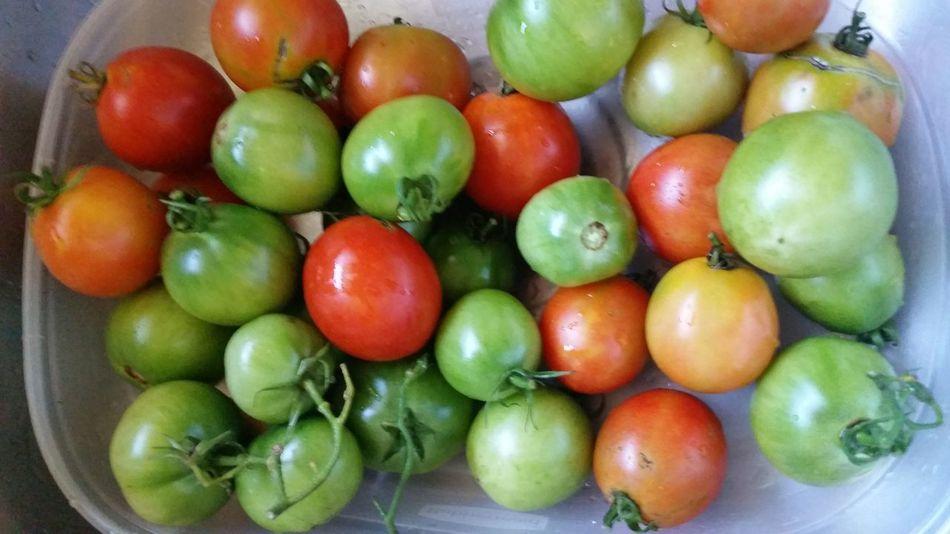 Green Color Red Color Veggie Gardening Tomatoes Green Tomatoes Red Tomatoes Summer Garden Harvesting Vegetable