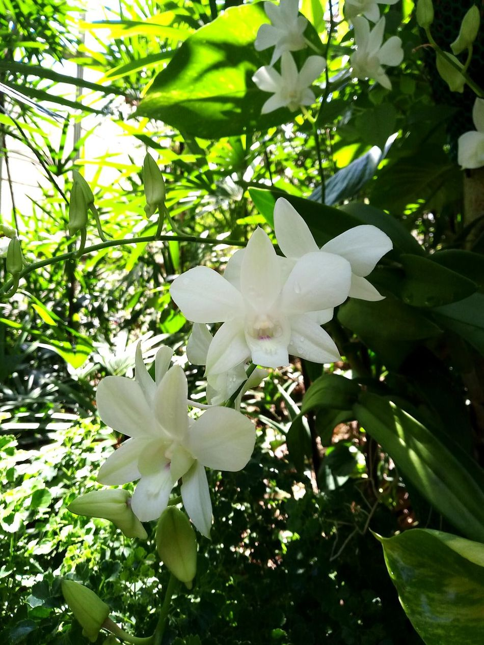 Orchid Orchid Blossoms Orchid Flower Orchid Flowers Orchids Collection Orchidflower No People Beauty In Nature Plant White Color Nature Growth Outdoors Day Close-up