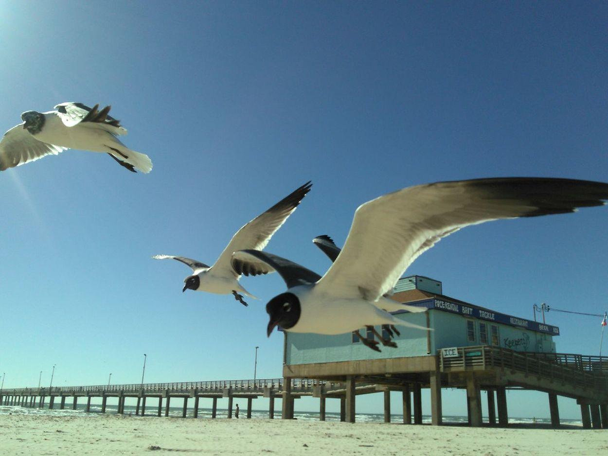 Showcase March Flock Of Gulls