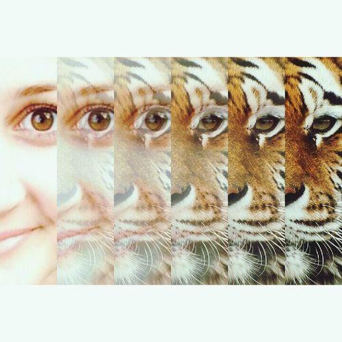 Kämpfe wie ein Tiger! First Eyeem Photo