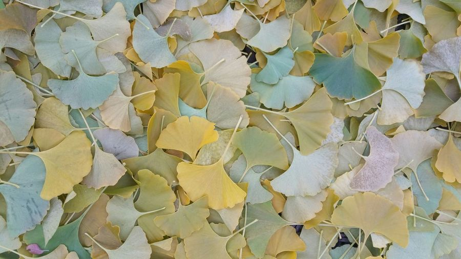 autumn splendor Nature, Colors, Autumn, Light And Shadow Autumn Leaves, leaves, soft, patina, leaves, pattern, background, serene, serenity, green, yellow