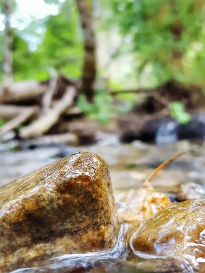 Playing With Rocks Creekside Idyllic Creekside Rivers Abundance Abstract Close-up Macro Rocks Eye4photography  From My Point Of View Wilderness EyeEm Fine Art Eyeemphotography Outdoors Beauty In Nature Trees Perspective Nature Adventure Club Forests