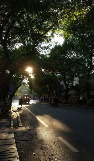Tree Street Road Outdoors The Way Forward Car Illuminated