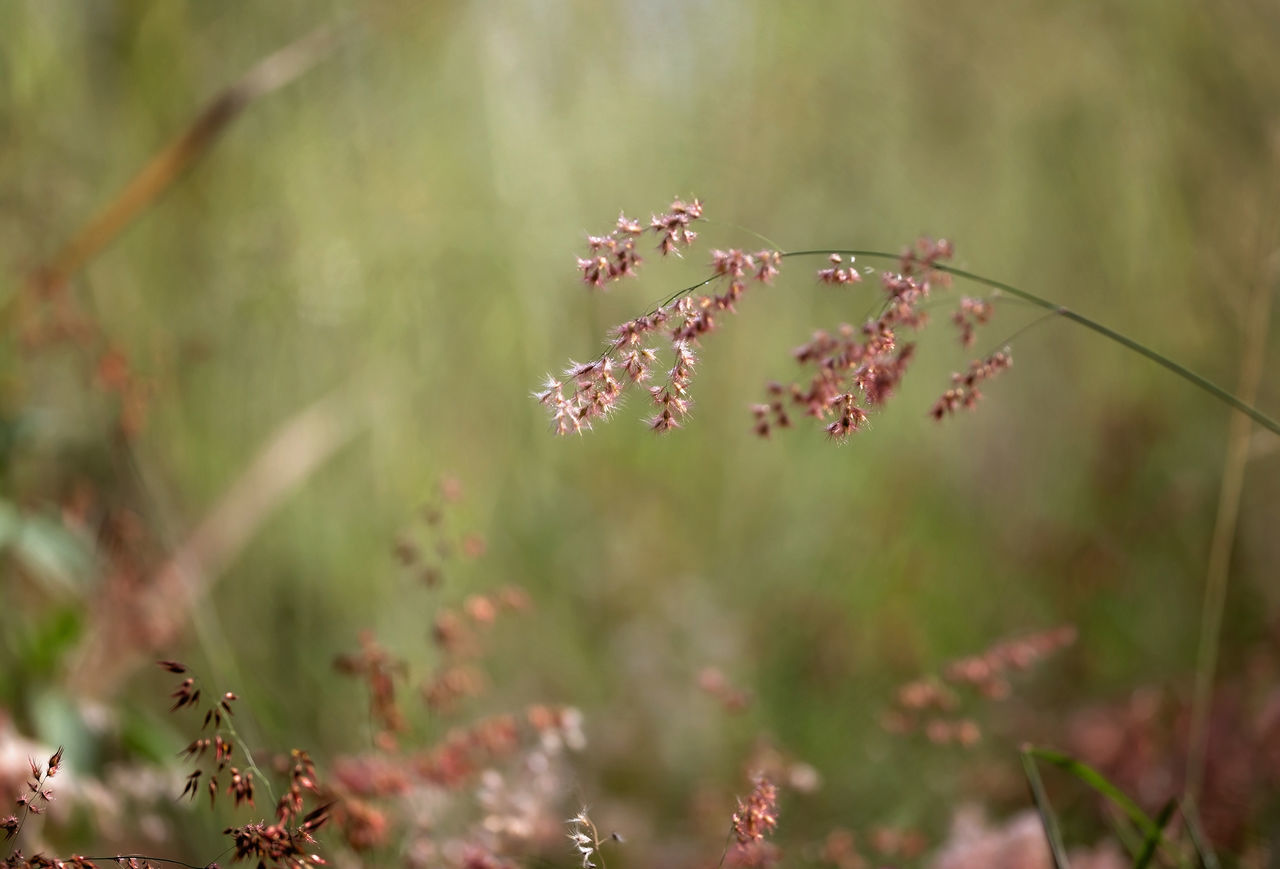 growth, nature, plant, no people, flower, day, fragility, beauty in nature, outdoors, freshness, grass, close-up, tree