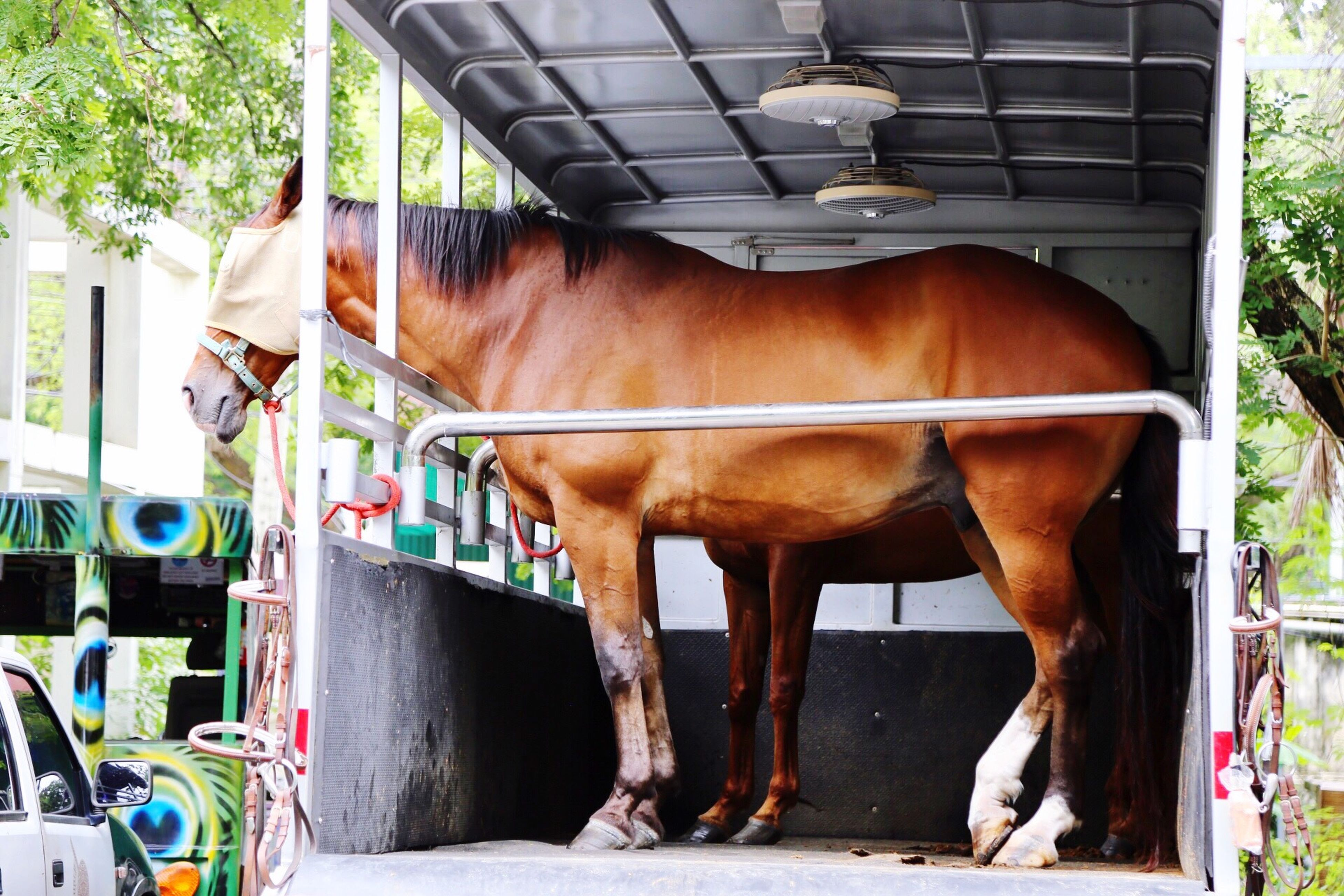 domestic animals, horse, mammal, animal themes, livestock, standing, day, one animal, no people, outdoors