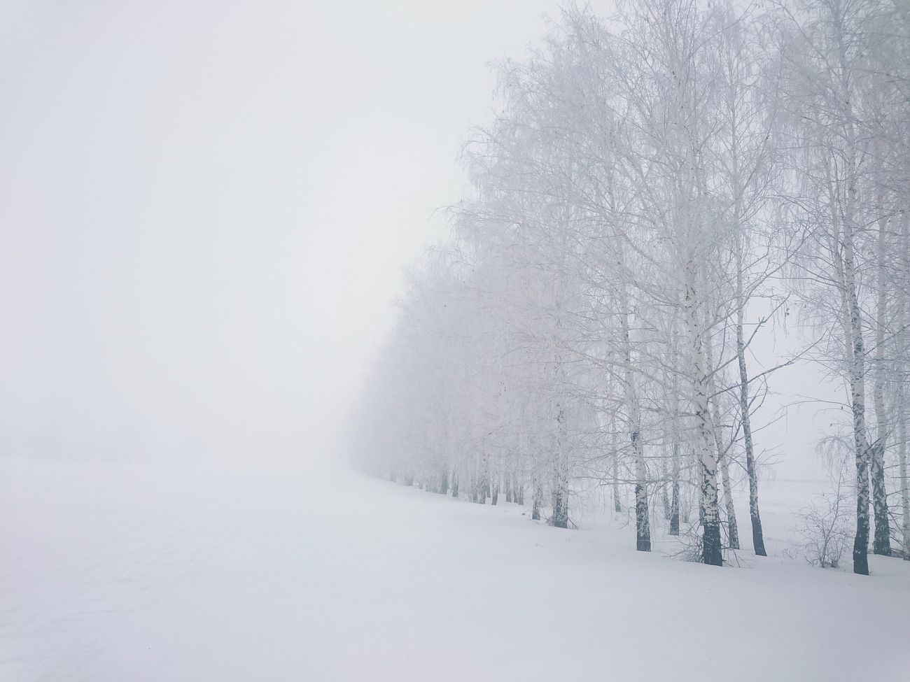 Snow Winter Cold Temperature Tree Snowing Forest Nature Fog Landscape Scenics No People Day Beauty In Nature Outdoors Sky зима туман береза лес и природа FromRussiaWithLove