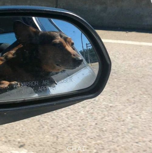 Traveling Traveling Dogs Dogs On The Road Open Road Dogslife Dog❤ Dog Love Dog Dogs In A Car Dogs Traveling Doglover