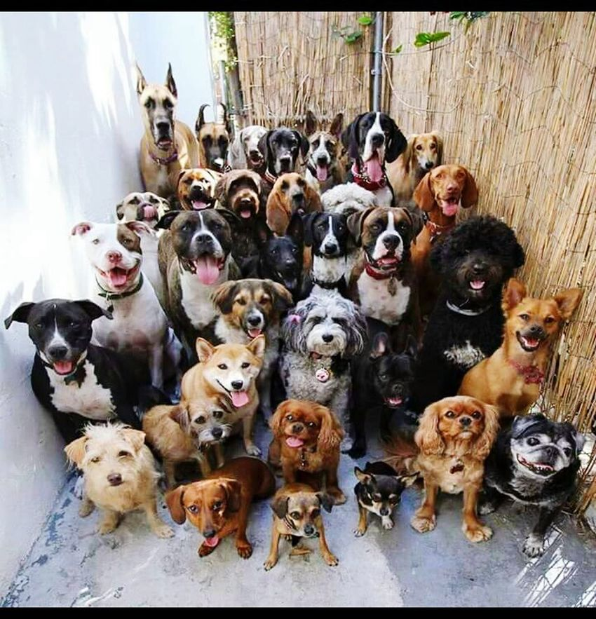 Tatlıkopek Dogs Dogsfamily Cute Pets Petslife Köpekler Cheese! Hello World