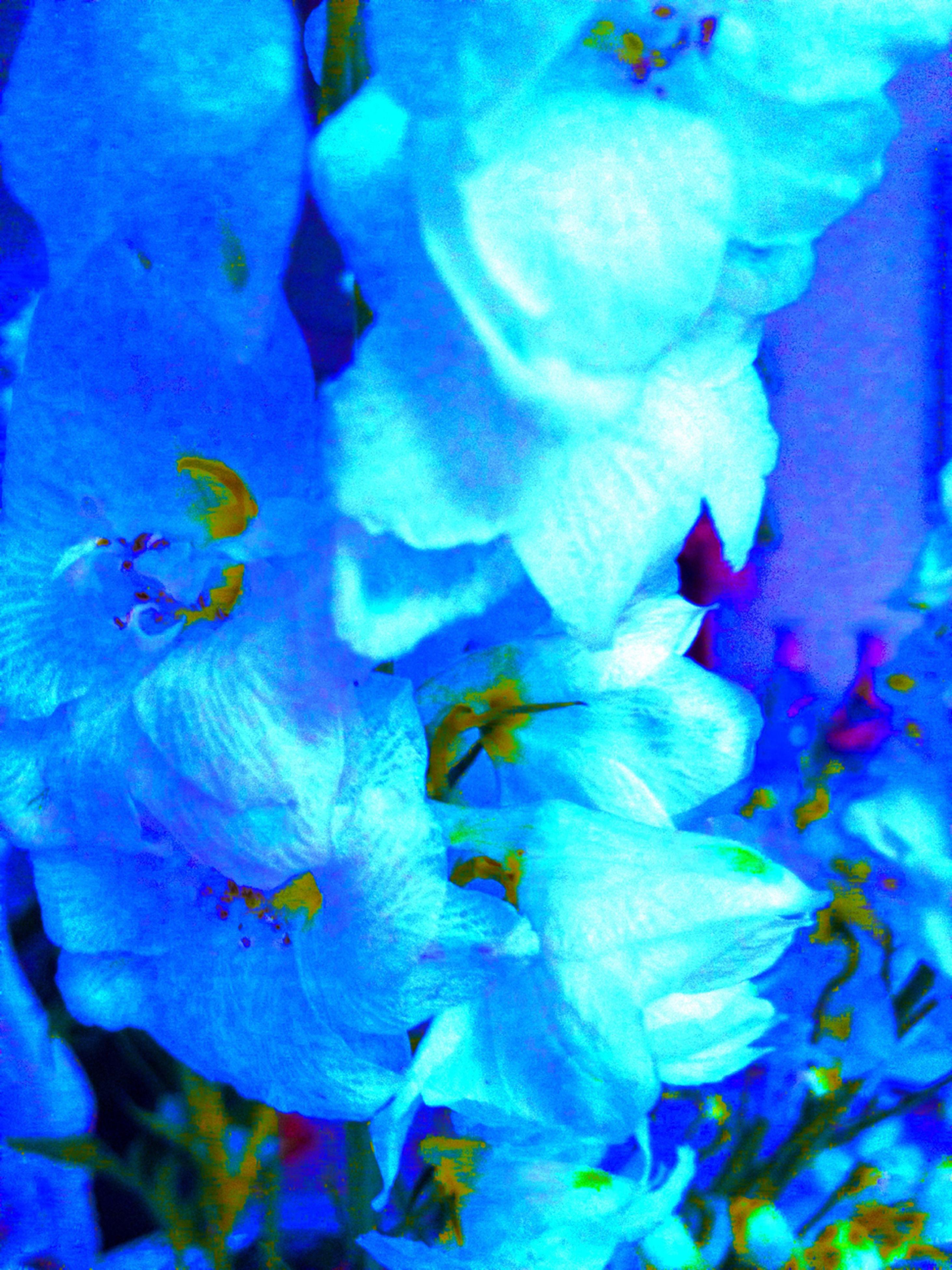 underwater, blue, undersea, sea life, animal themes, swimming, animals in the wild, water, fish, wildlife, indoors, full frame, close-up, aquarium, school of fish, nature, backgrounds, jellyfish, sea